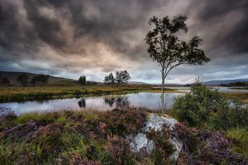 Loch Ba Tree