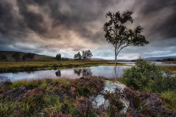 Loch Ba Tree by Buffalo_Tom