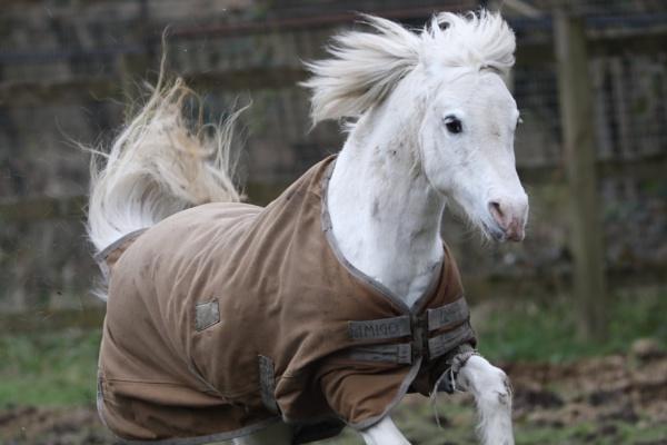 Pony by kelvin7