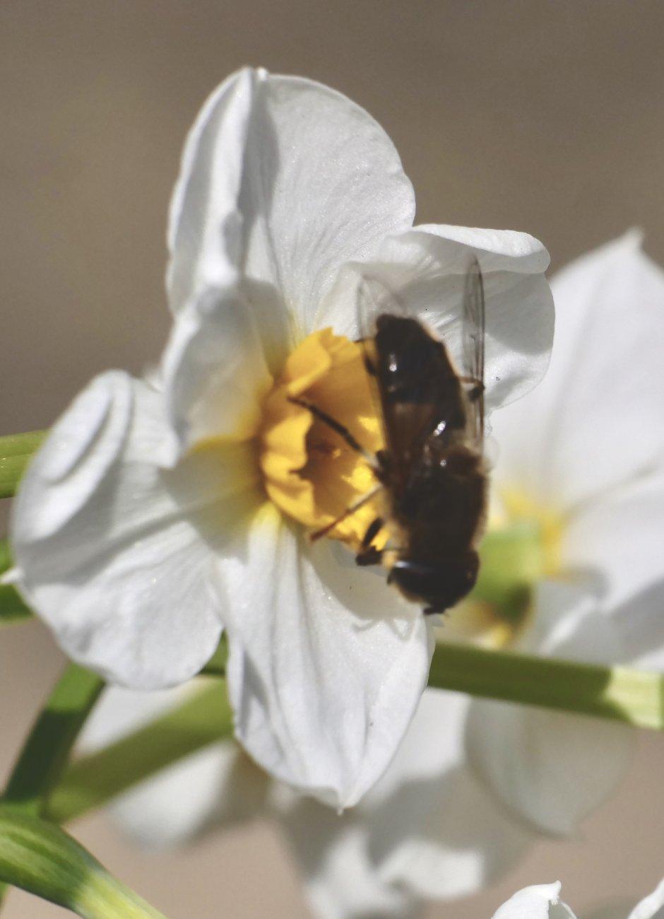 call me the pollinator