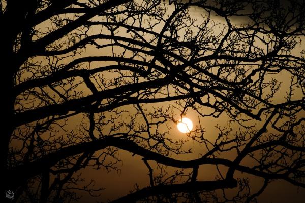 Sahara dust Sunrise by Petemoyes