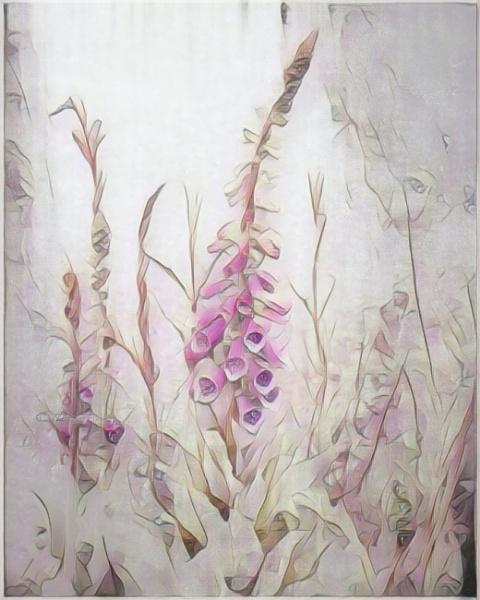 Foxglove by sweetpea62