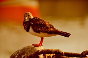 """""""Birding"""" in Whitstable UK..."""