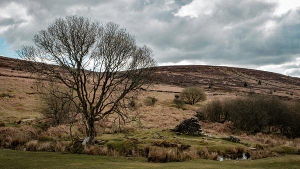 Dartmoor Tree and Ruins by topsyrm