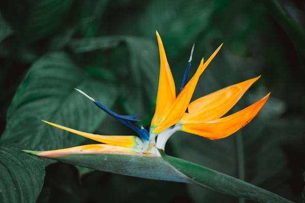 Spring Bloom by manicam