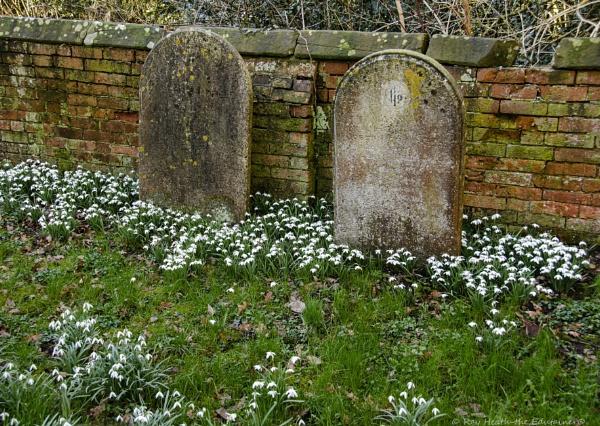 St.Chad\'s church graveyard & snowdrops 19 ..March 2021 by RayHeath