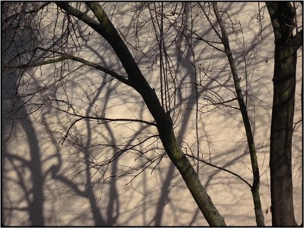 shadowtree still (2) by FabioKeiner