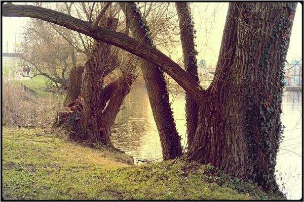 watertrees by FabioKeiner