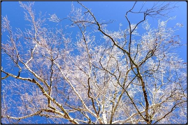 hoarfrost birch by FabioKeiner