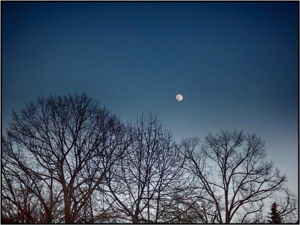 nightfall trees by FabioKeiner