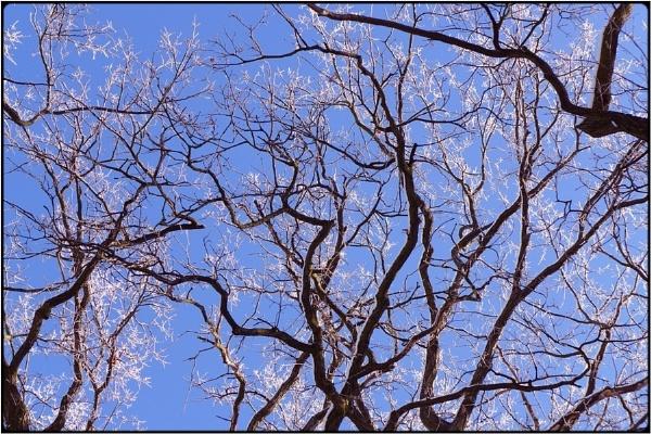 hoarfrost twigs by FabioKeiner