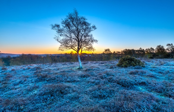 Silver Birch Sunrise by NickLucas