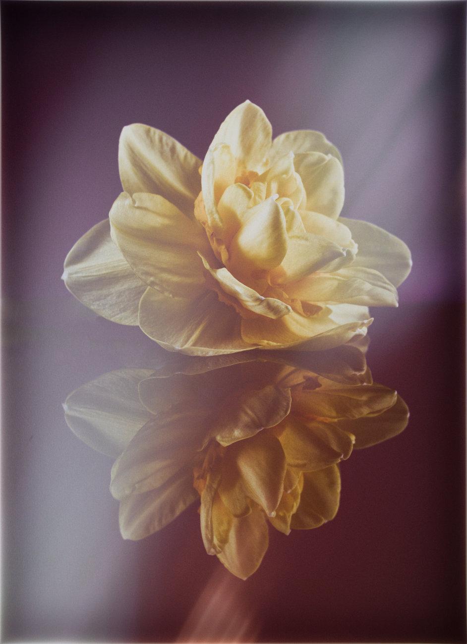 Daffodils with a twist
