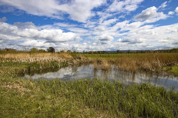 Slimbridge Wetlands - Glos by VincentChristopher