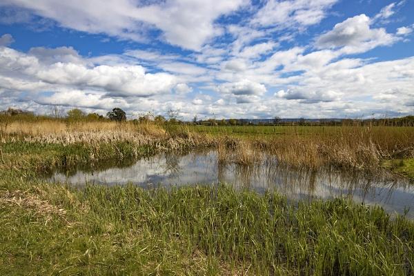 Slimbridge Wetlands _Glos by VincentChristopher