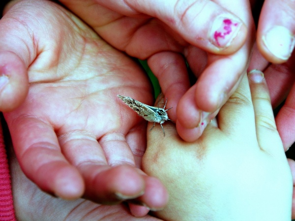 Safe in small hands. by niknakpaddywhack