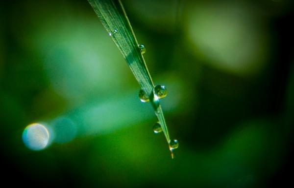 Rainy season by GokulRajendran234