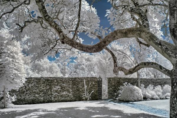 Garden Wall by Adee