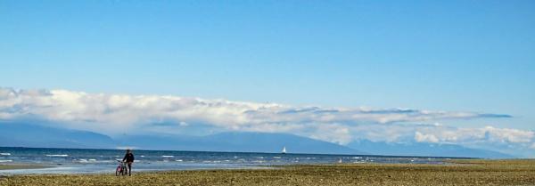 A Beach Cruiser! by judee