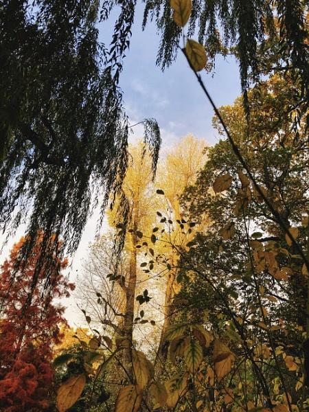 Framed by foliage by Kaxxie