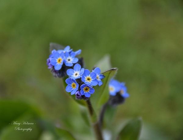 Beautiful wild flowers by margymoo