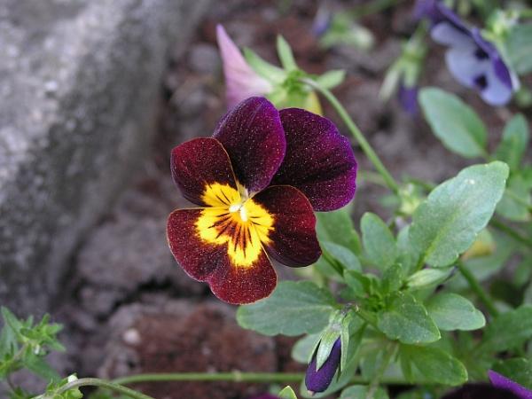 Flower by Realszoc75