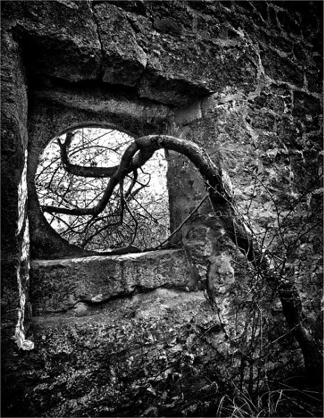 Anaconda by KingBee