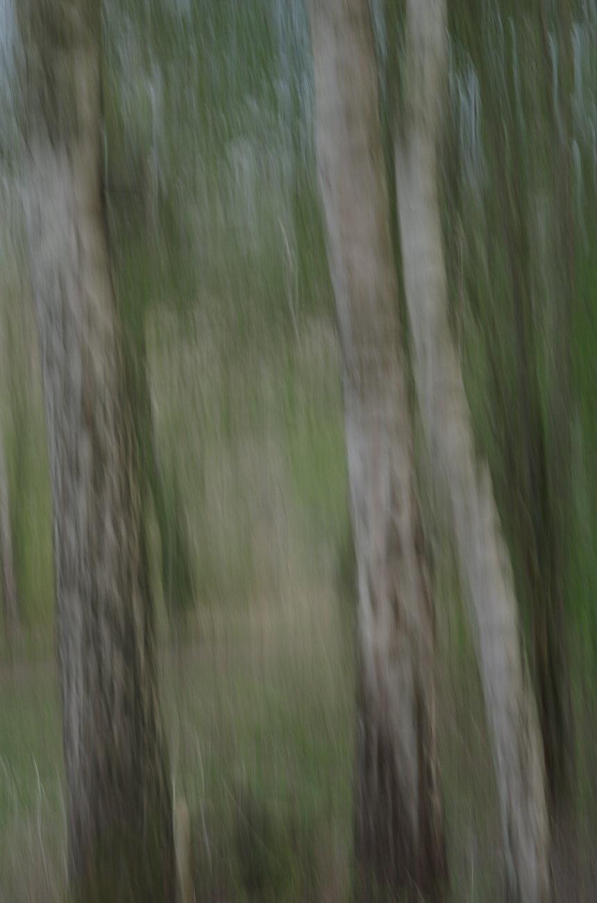 ICM Witton Mill woodland