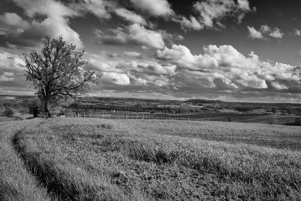 Just Fields and a Tree by RolandC
