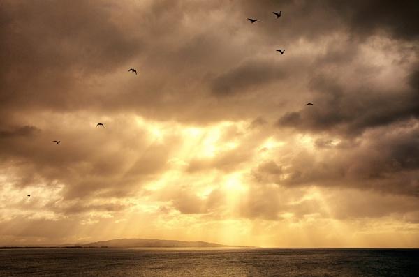 Dawn Flight by capturingthelight