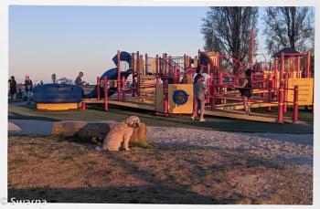 Playtime at the Centennial Beach ...