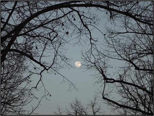 moontrees by FabioKeiner