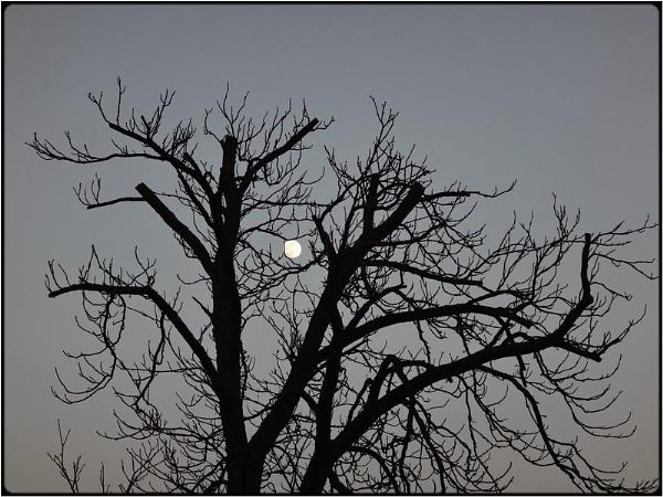 moontrees 2 by FabioKeiner