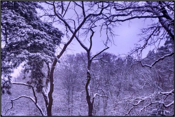 winterwood by FabioKeiner