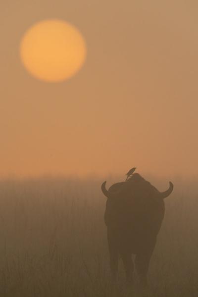 Dawn Patrol by NickDale