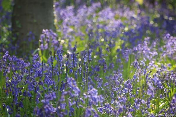Blue abundance by PMWilliams