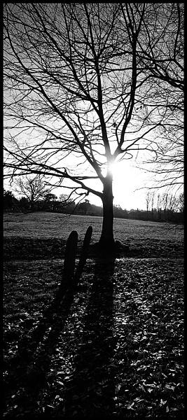 MONO TREE by SOUL7