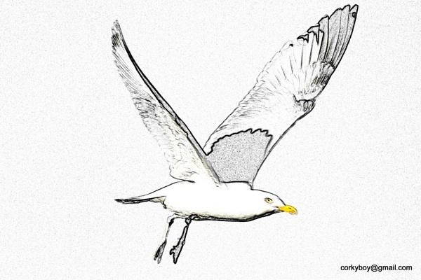 Seagull. by rustyshackleford