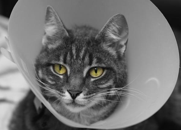 cone of shame! by bornstupix2