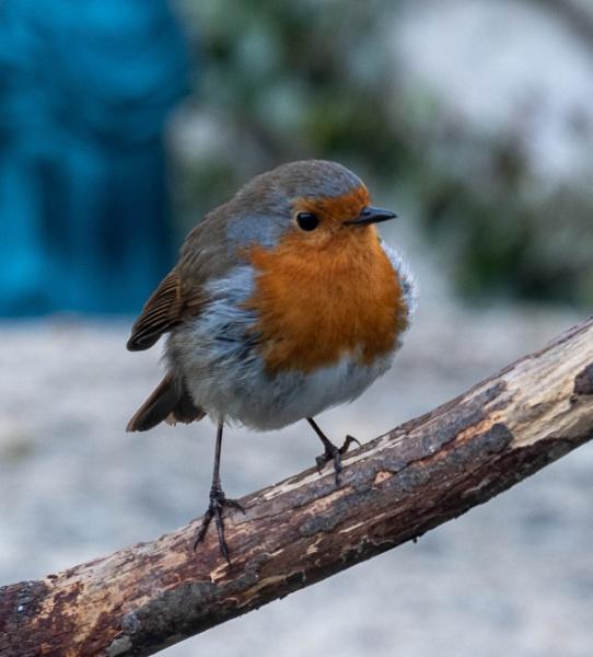 Gardeners Little Friend A Robin by Aveeno