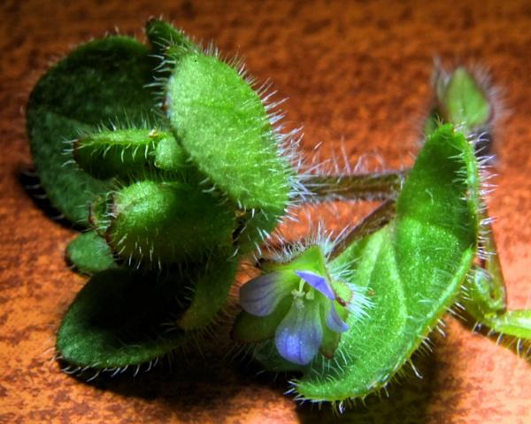 mikro plant by elousteve