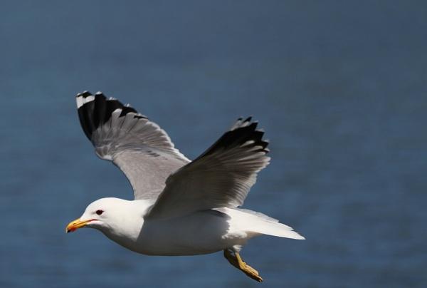 Gull Dern Fast by madeinbrooklyn