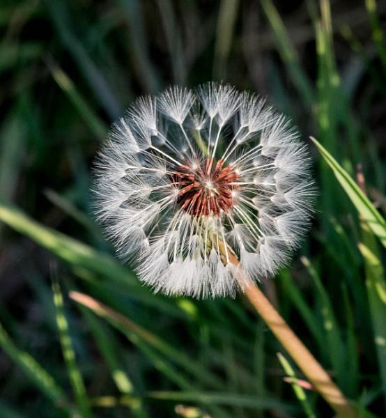 flower seads by madbob