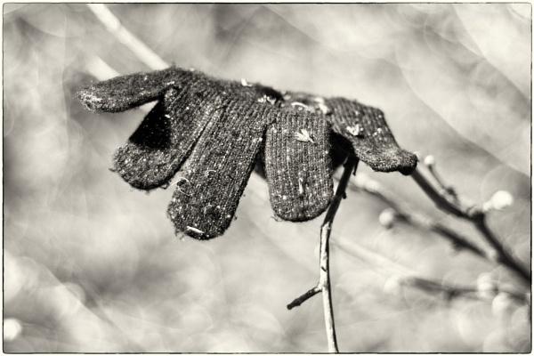 Little Fingers by woolybill1