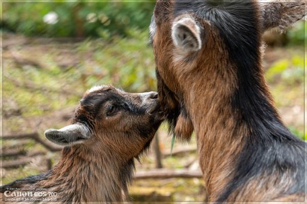 Kiss Kiss! by Paul_Iddon