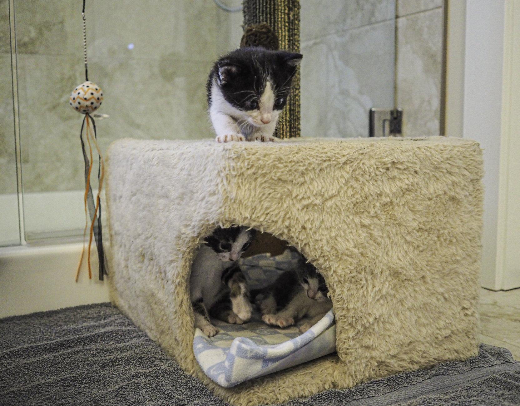 Thursday Play Kittens