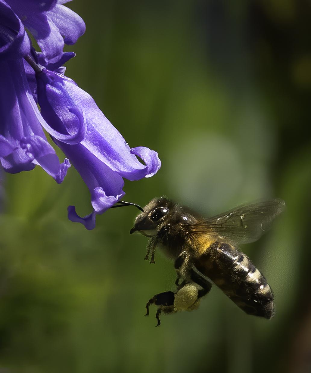 Pollen laden