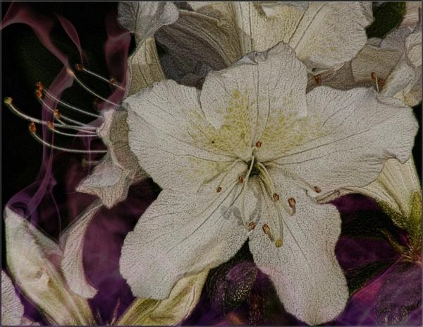 Spring Fever by PhilT2