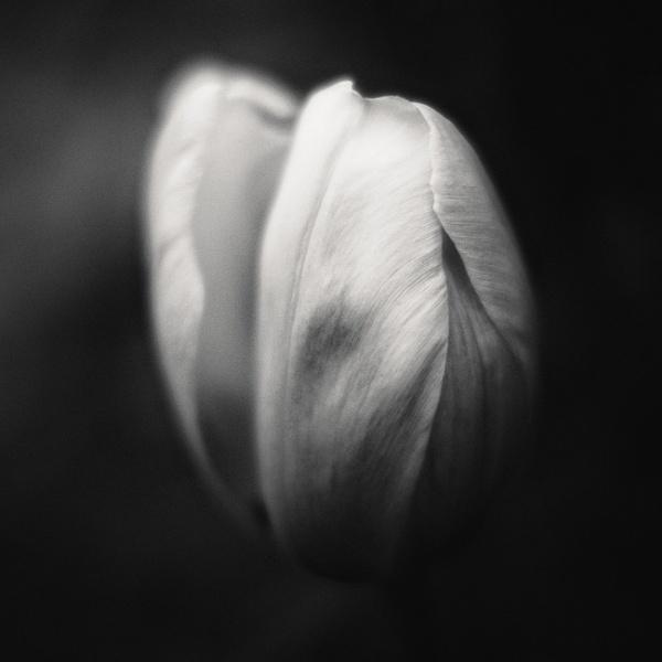 Flowers in the shadows by mlseawell