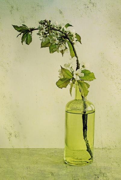 Blossom Bottled by Irishkate